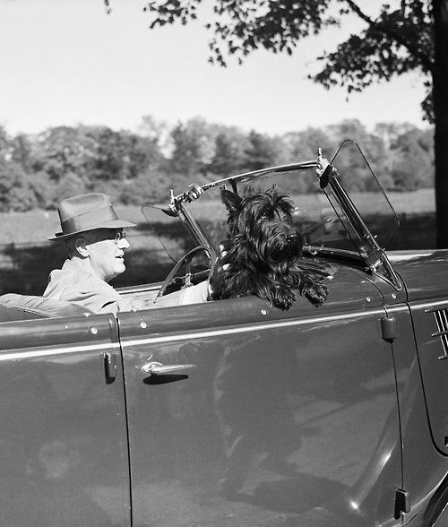 Fala the famous FDR scottie Dog